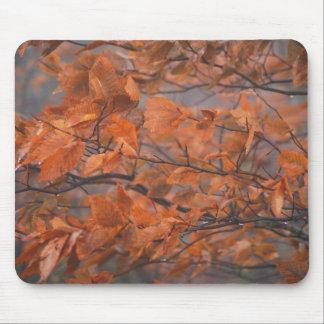 Beauté d'automne tapis de souris