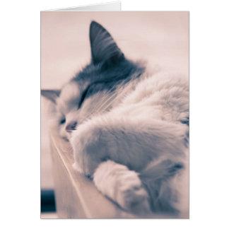 Beauté de sommeil carte de vœux