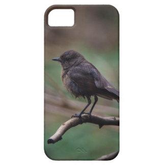 Beauté d'oiseau coque iPhone 5 Case-Mate