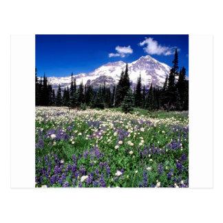 Beauté saisonnière de parc plus pluvieuse carte postale