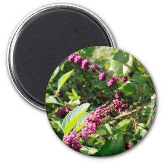 Beautyberry sauvage Bush dehors dans le jour Aimant