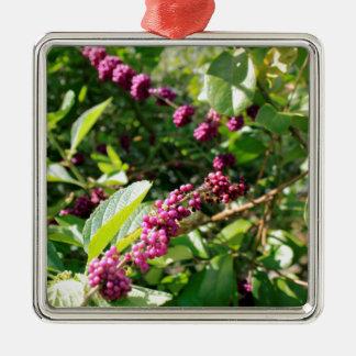 Beautyberry sauvage Bush dehors dans le jour Ornement Carré Argenté