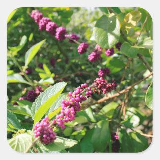 Beautyberry sauvage Bush dehors dans le jour Sticker Carré