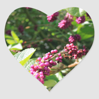 Beautyberry sauvage Bush dehors dans le jour Sticker Cœur