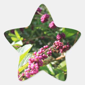 Beautyberry sauvage Bush dehors dans le jour Sticker Étoile