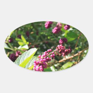Beautyberry sauvage Bush dehors dans le jour Sticker Ovale