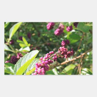 Beautyberry sauvage Bush dehors dans le jour Sticker Rectangulaire