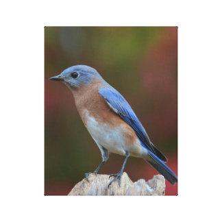 Beaux-arts d'oiseau bleu toiles