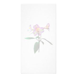 Beaux lis asiatiques roses photocartes