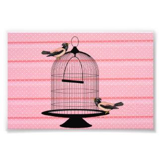 beaux oiseaux roses vintages et point de polka mig photographes
