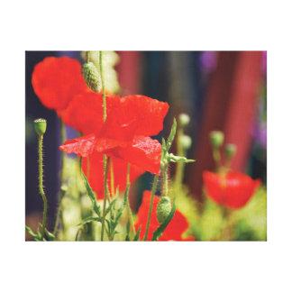 Beaux pavots en gros plan de rouge de photo toiles