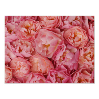 Beaux petits roses posters