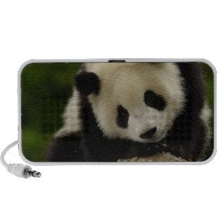 Bébé de panda géant (melanoleuca d'Ailuropoda) 2 Haut-parleurs De Voyage
