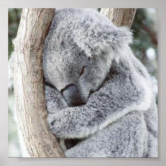bébé de sommeil de koala posters