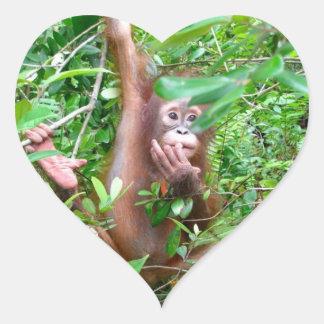 Bébé d'orang-outan dans la jungle du Bornéo Sticker Cœur