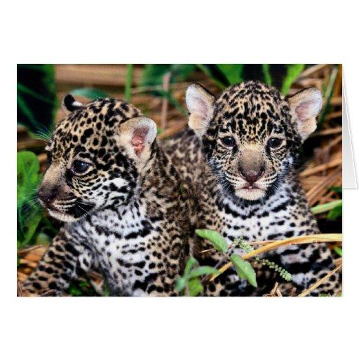 B b jaguar cub carte zazzle - Bebe du jaguar ...