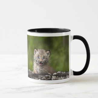 Bébé Lynx regardant au-dessus de l'arbre tombé par Mug