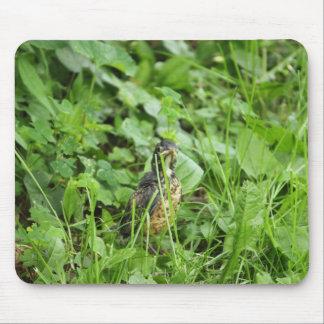 Bébé Robin dans l'herbe Tapis De Souris