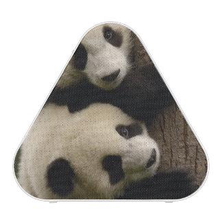 Bébés de panda géant melanoleuca d Ailuropoda 2