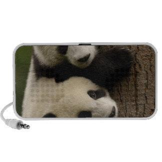 Bébés de panda géant (melanoleuca d'Ailuropoda) 2 Haut-parleur