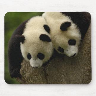 Bébés de panda géant (melanoleuca d'Ailuropoda) 3 Tapis De Souris