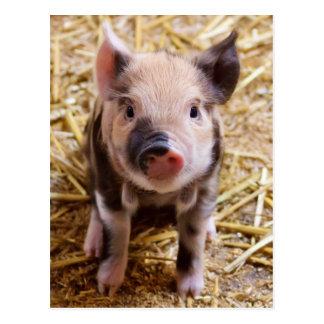 Bébés mignons de basse-cour d'animaux de ferme de carte postale