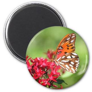 Bel aimant de papillon