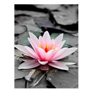 Bel art rose de zen de nénuphar de fleur de Lotus Carte Postale