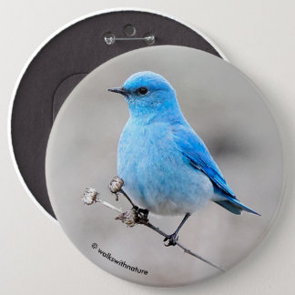 Bel oiseau bleu de montagne badge