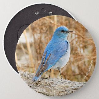 Bel oiseau bleu de montagne badges