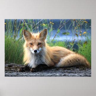 Belle affiche de portrait de photo de renard rouge posters