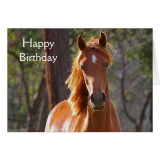 Belle carte d'anniversaire de photo de cheval de