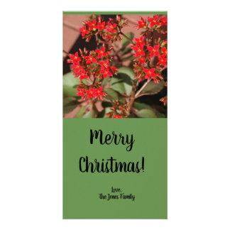 Belle carte de Noël rouge de plante de fleur