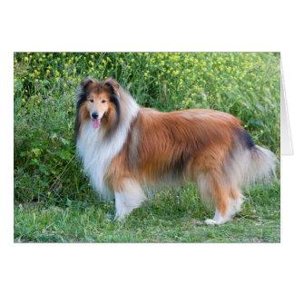 Belle carte de note de blanc de photo de chien