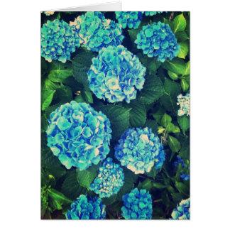 Belle carte de voeux bleue de blanc d'hortensia
