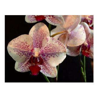 Belle carte postale blanche et magenta d'orchidées