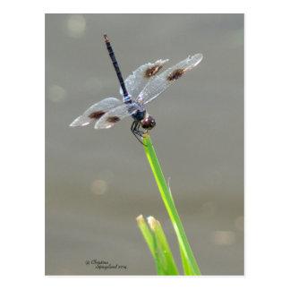 Belle carte postale bleue de libellule