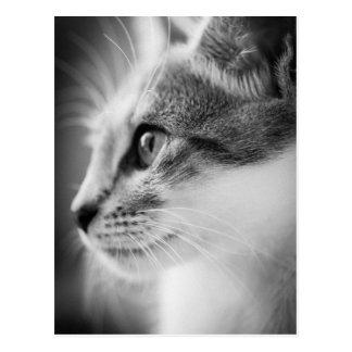 Belle carte postale de chaton