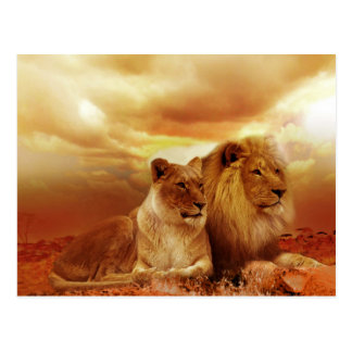 Belle carte postale de couples de lion