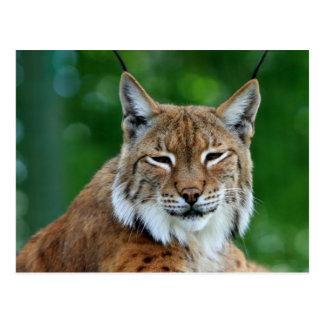 Belle carte postale de photo de chat sauvage ou de