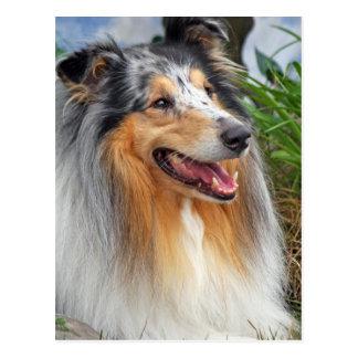 Belle carte postale de photo de chien rugueux de