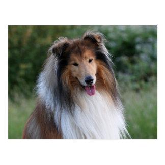Belle carte postale de portrait de chien de colley