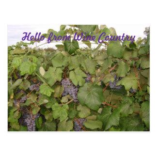 Belle carte postale des raisins