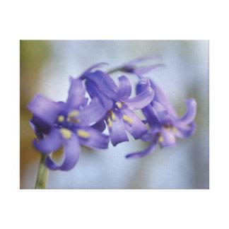 Belle fleur en gros plan de jacinthe des bois de toiles