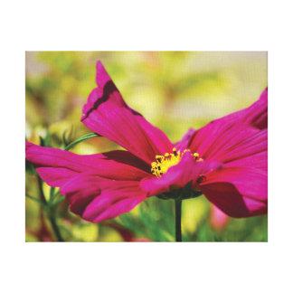 Belle fleur en gros plan de rose de photo sur le toiles