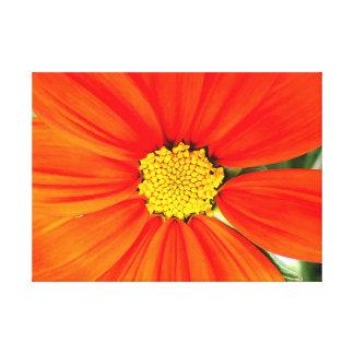 Belle fleur orange toile