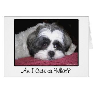 Belle le chien de Shih Tzu Cartes