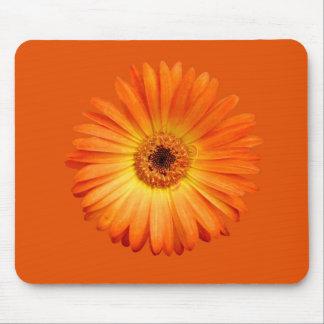 Belle marguerite orange et jaune de Gerbera Tapis De Souris