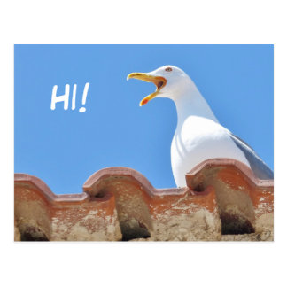 Belle mouette - bonjour carte postale