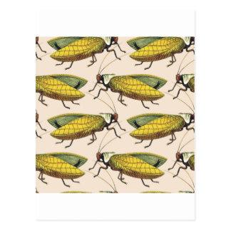 Belle peinture de sauterelle cartes postales